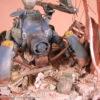 fichtenfoo-beetle-13
